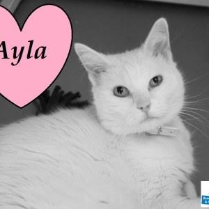Meet Ayla