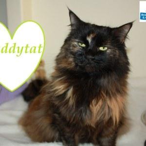 Meet Puddytat