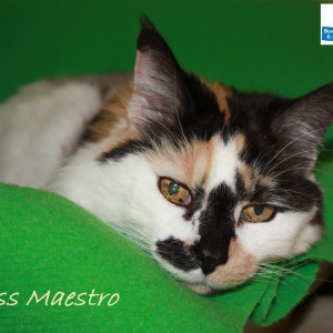 Meet Miss Maestro