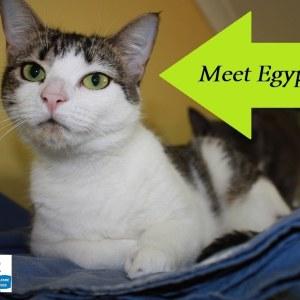 Meet Egypt