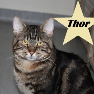 Meet Thor