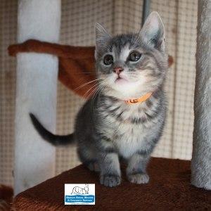 Meet Maple