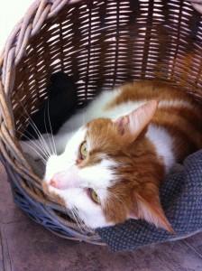 Butterscotch in a basket