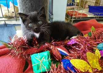 Tux Christmas Appeal