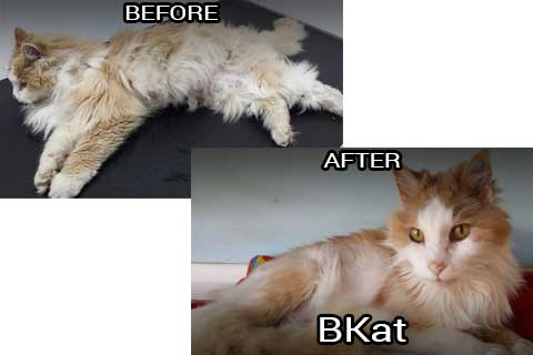 bkat before & after