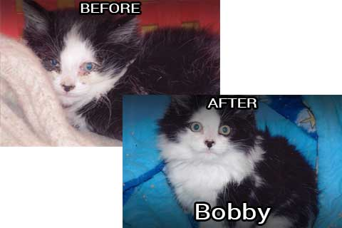 bobby before & after