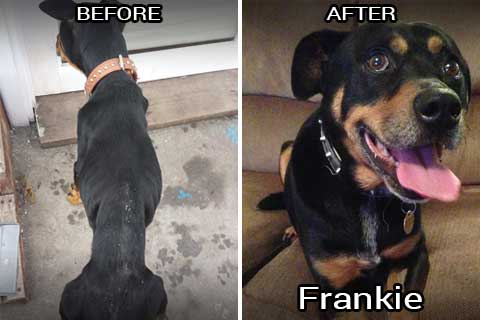 frankie before & after