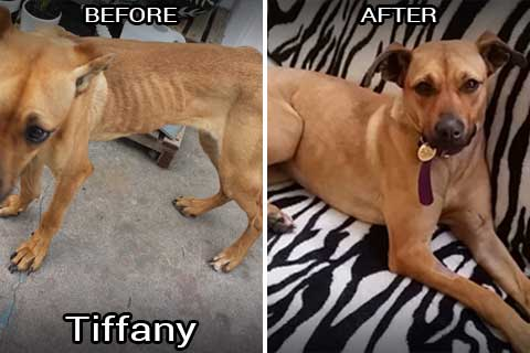 tiffany before & after