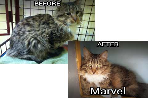 Marvel before & after
