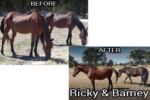 Ricky and Barney before & after