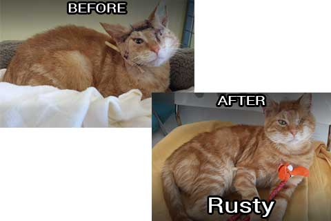 Rusty before & after