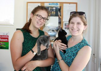 Ajax&Willow Adopted
