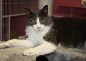 Bright Eyes Adopted