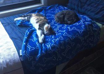 Ehlonna & Lelu Adopted